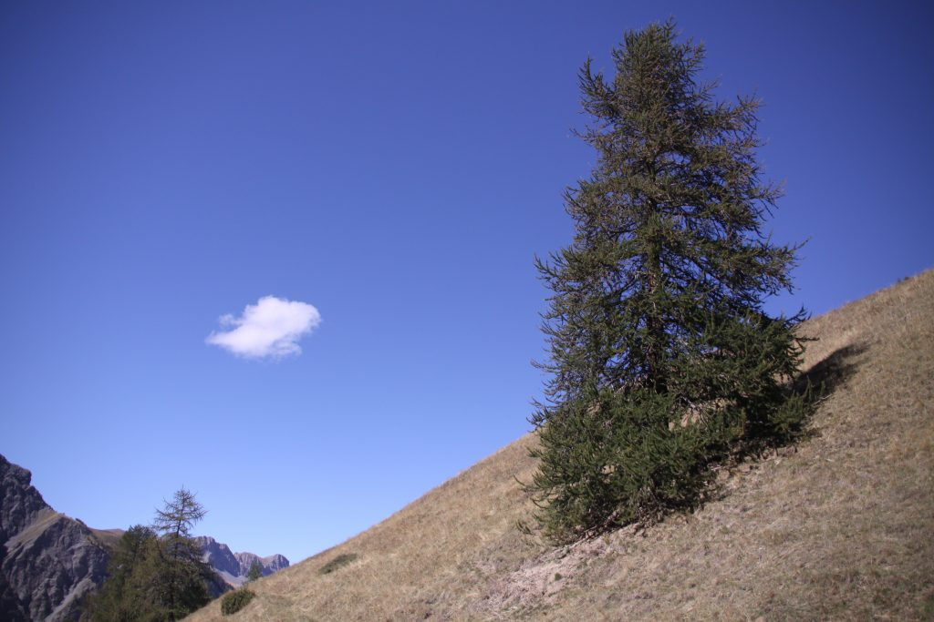 The tree on the hill: ZeMarmot movie reference